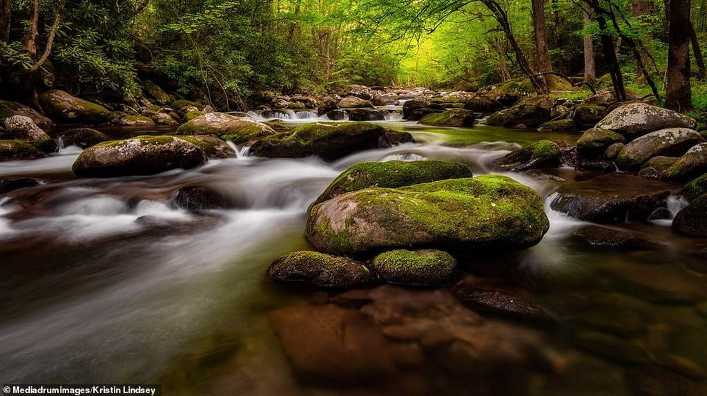 best photography nature by kristin lindsey