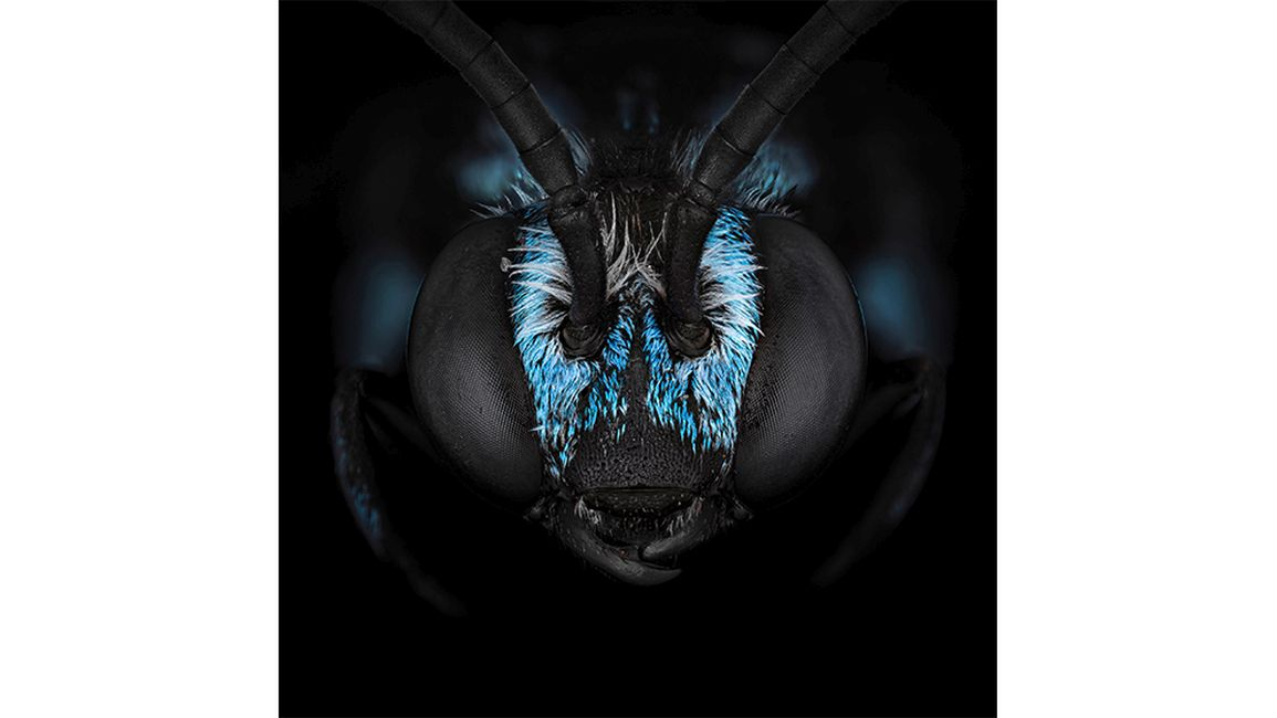 macro photography photographer year 2020 insect headshots by ali moughnieh